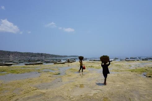 Sous un soleil de plomb, ces femmes transportent des paniers d'algues sur la rive.