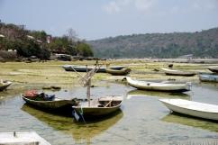 Les embarcations qui servent à égoutter en partie les algues.