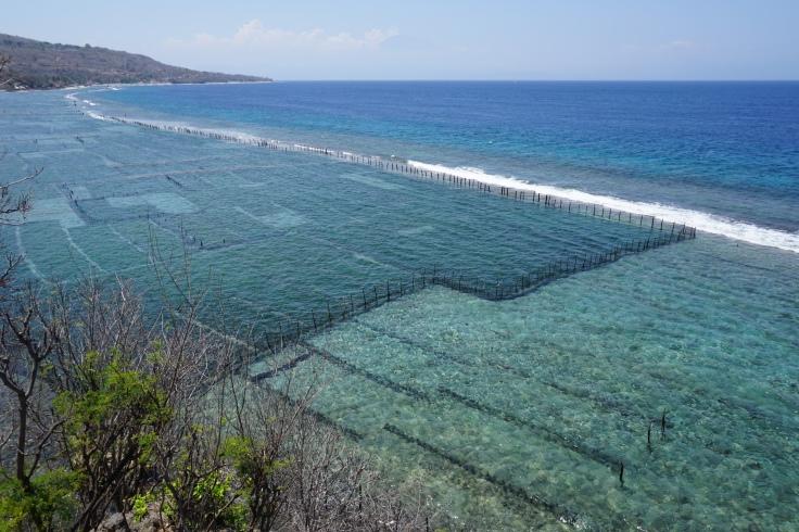 Une ferme d'algues sur la côte est de Nusa Penida, Bali.